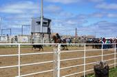 Pennington Cty 4-H Rodeo in Wall, SD 3
