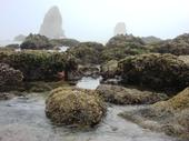 Tidal Pools near Haystack Rock